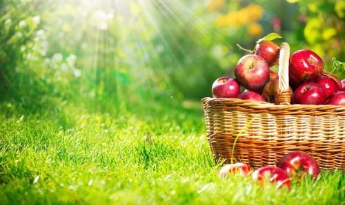 колко полезни са ябълките